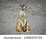 Very Funny Meerkat Manor Sits...