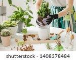 Woman Gardeners  Transplanting...