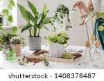 Woman Gardeners  Watering Plant ...