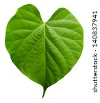 Heart Shaped Leaf Isolated On...