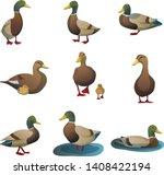 Wild Duck Swimming Bird Vector...