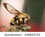 hemaris tityus | Shutterstock . vector #140843731