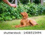 obedience training. man...   Shutterstock . vector #1408515494