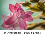 flowers in the city park | Shutterstock . vector #1408517867