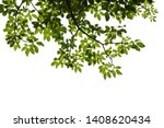 green tree branch isolated on... | Shutterstock . vector #1408620434