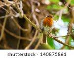 robin  bird  in tree   Shutterstock . vector #140875861