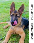 cute puppy of german sheperd...   Shutterstock . vector #1408846601