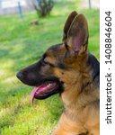 cute puppy of german sheperd...   Shutterstock . vector #1408846604