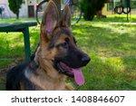 cute puppy of german sheperd...   Shutterstock . vector #1408846607