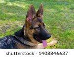 cute puppy of german sheperd...   Shutterstock . vector #1408846637
