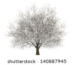 Winter Hornbeam Tree Isolated...