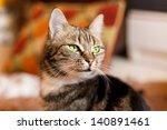 Beautiful European Cat In Fron...