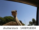 The Ostrich Take A Look Through ...