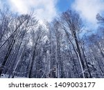 winter background. forest whole ... | Shutterstock . vector #1409003177