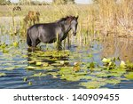 horse grazing waterlilies... | Shutterstock . vector #140909455