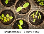 Potted Seedlings Growing In...