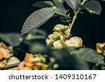 green leaves of a tree | Shutterstock . vector #1409310167
