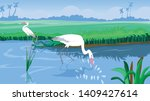 The White Stork Or Egret Roams...