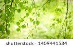 light green natural background... | Shutterstock . vector #1409441534