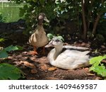 Two Ducks Near The Pond...