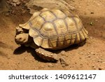 Stock photo african spurred tortoise on the ground is a kind of tortoise the origin of the terrestrial turtle 1409612147