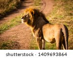 Stock photo lion in serengeti national park in tanzania 1409693864