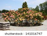 Stock photo details of a wonderful rose garden or rosarium in lyon 141016747
