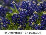 A Closeup Of A Cluster Of The...