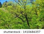 north korean scenery. woodland. ... | Shutterstock . vector #1410686357