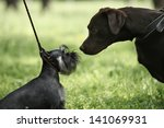Big And Little Dogs Rendezvous