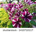 Colorful Mix Of Flowers Of...