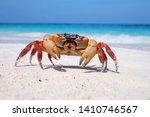 Hairy Leg Mountain Crab At...