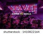 sativa or indica marijuana...   Shutterstock . vector #1410822164