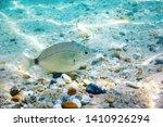 sunbeams underwater rocks and... | Shutterstock . vector #1410926294