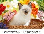 Thai Cat In Spring Flowers