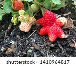 garden strawberries exhibiting... | Shutterstock . vector #1410964817