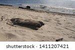 Sand Coast With Many Rotten...