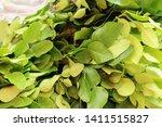 kaffir lime leaves in market   Shutterstock . vector #1411515827