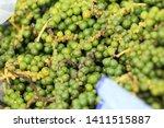 green pepper is bunch at street ...   Shutterstock . vector #1411515887