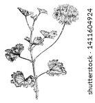 pelargonium zonale is an... | Shutterstock .eps vector #1411604924