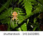 Spider In Its Spider\'s Web ...