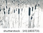 dry typha plants and snow ... | Shutterstock . vector #1411803731