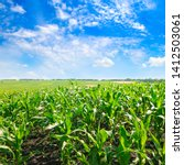 green field with corn. blue... | Shutterstock . vector #1412503061