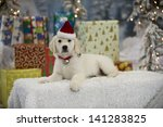 A Yellow Labrador Puppy Lies I...