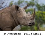 The Red Billed Oxpecker Is A...