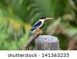 beautiful black capped... | Shutterstock . vector #141363235
