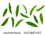 mango leafs isolated on a white ... | Shutterstock . vector #1413687437