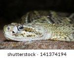 Mexican West Coast Rattlesnake...