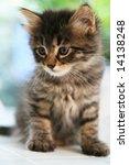 Stock photo cute kitten 14138248