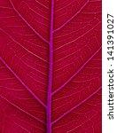 red leaf ficus religiosa close ... | Shutterstock . vector #141391027